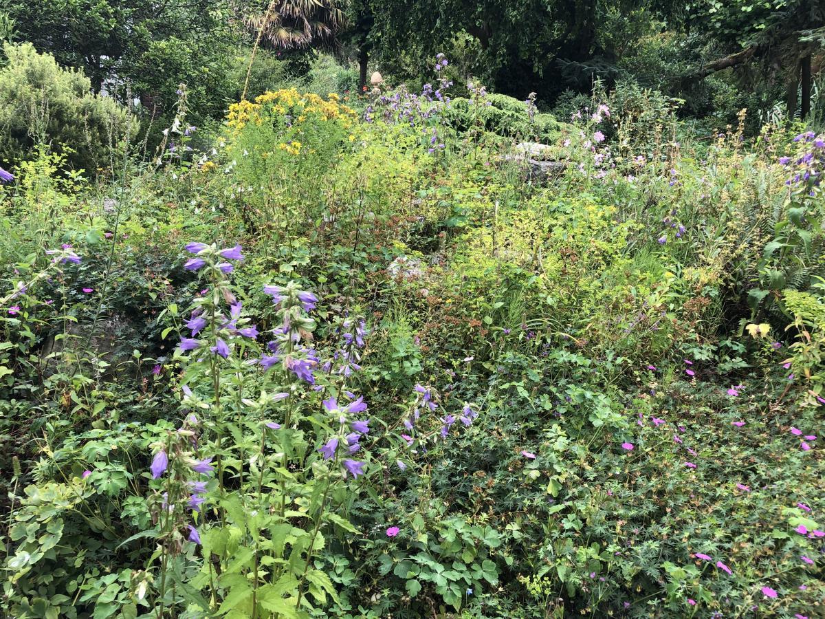 2019 07 11 Botanische tuin Zuidas IMG_0355